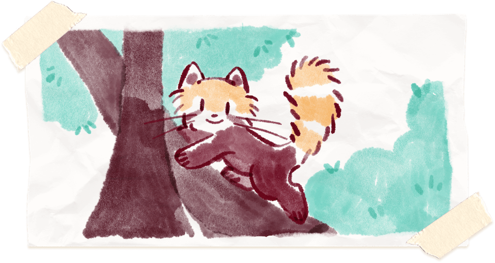 Water color painting of Ren the red panda climbing